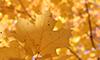 Folhas de uma arvore